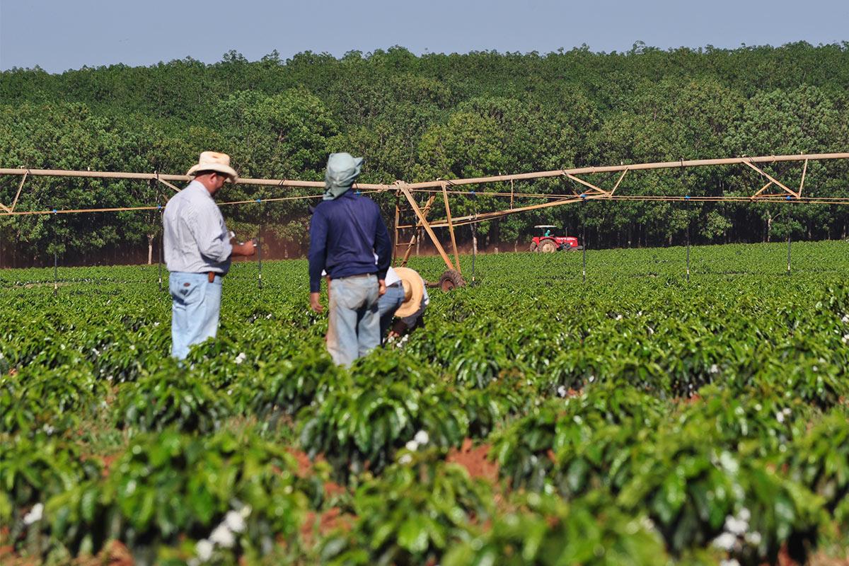 Brasil: O maior produtor de café do mundo!